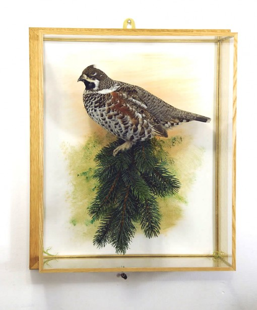cased Hazel Grouse - taxidermy -Tetrastes bonasia