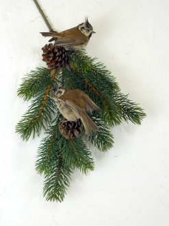a Crested TiT Bird Taxidermy