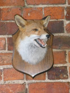Taxidermy fox mask