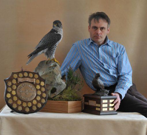 Taxidermy Gyrfalcon 8386 bird winner