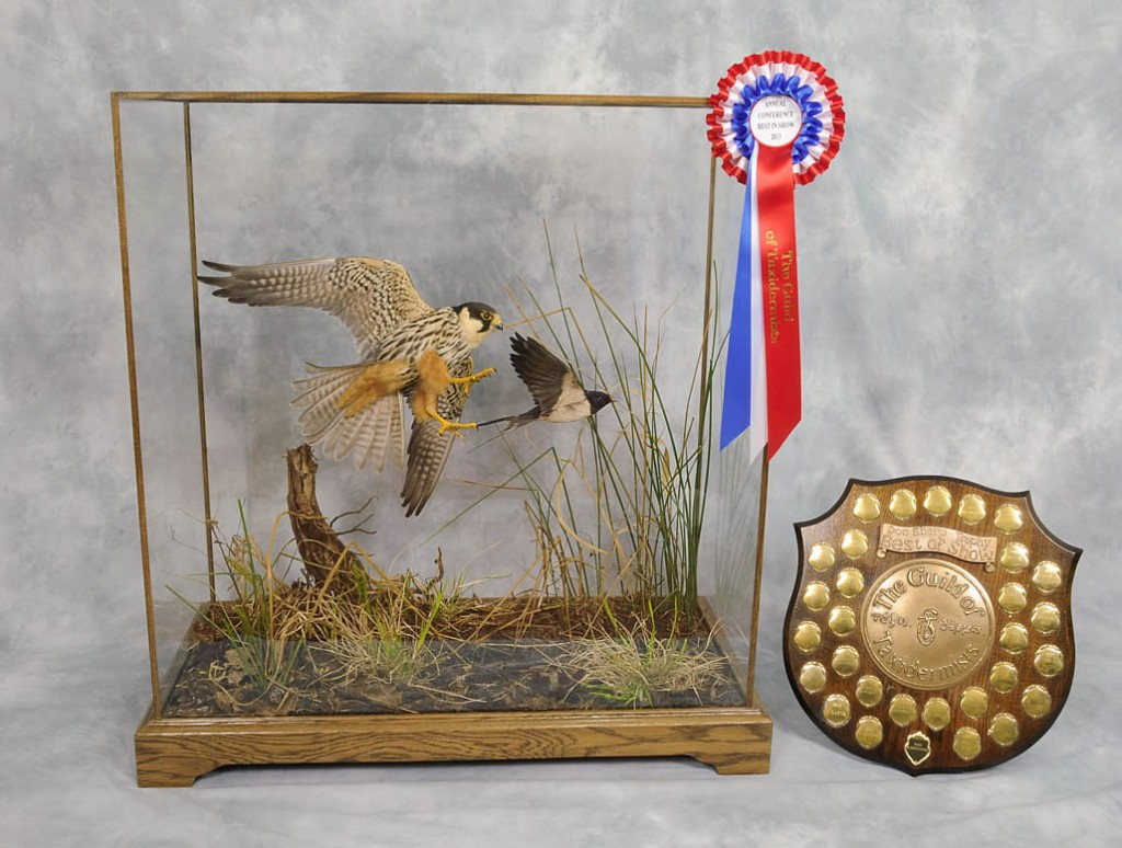 Hobby falcon Best of Show