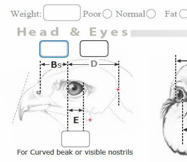 Bird Taxidermy Measurement Sheet Head sample
