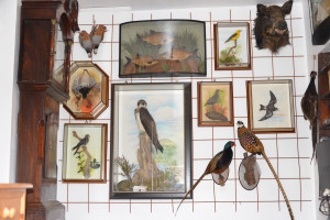 Taxidermy Display finihsed