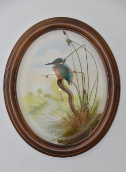 Kingfisher Taxidermy By Mike Gadd oval dome