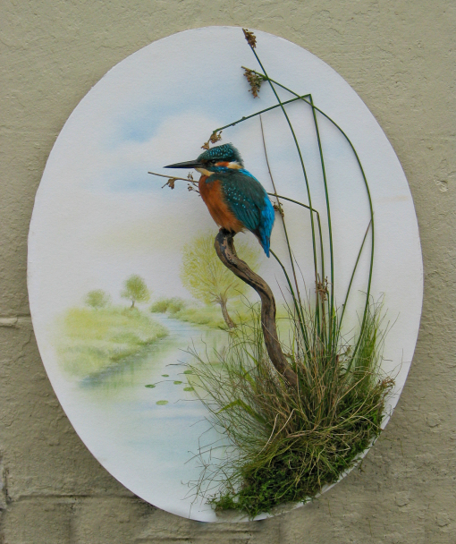 Kingfisher Taxidermy By Mike Gadd cover removed
