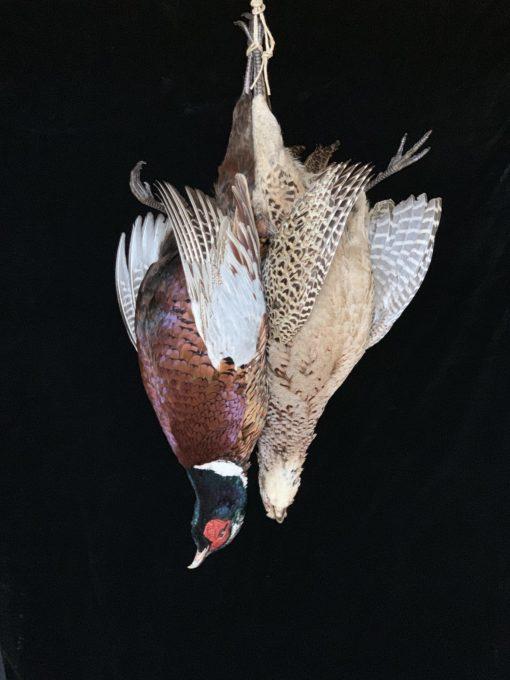 Hanging Dead Pheasants