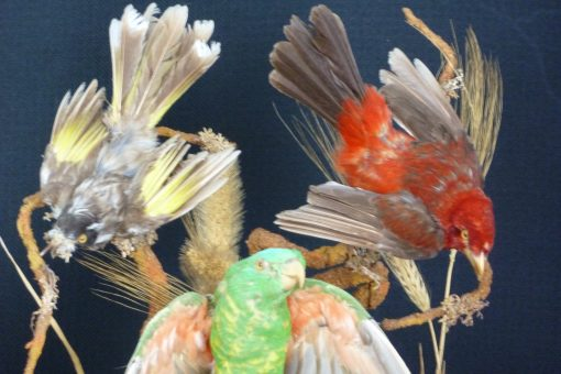 Antique Foreign Birds
