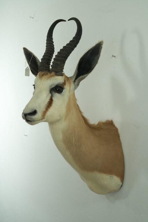 Springbok 9268