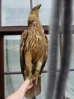 Eagle Cabinet Skin